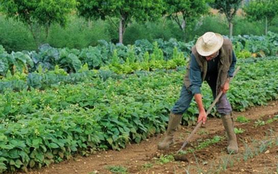 Cultiver son jardin pourrait devenir un acte criminel Crimin10