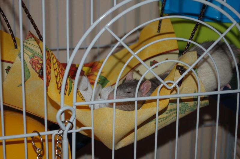 Avis sur ma cage :) ? Dsc_0012