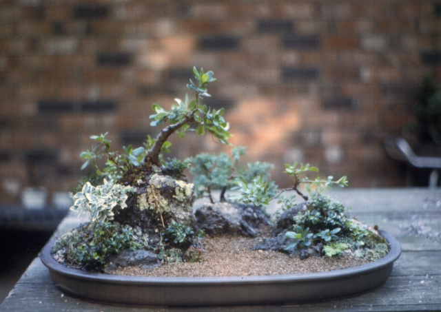 American Bonsai at the NC Arboretum - Page 2 _river10