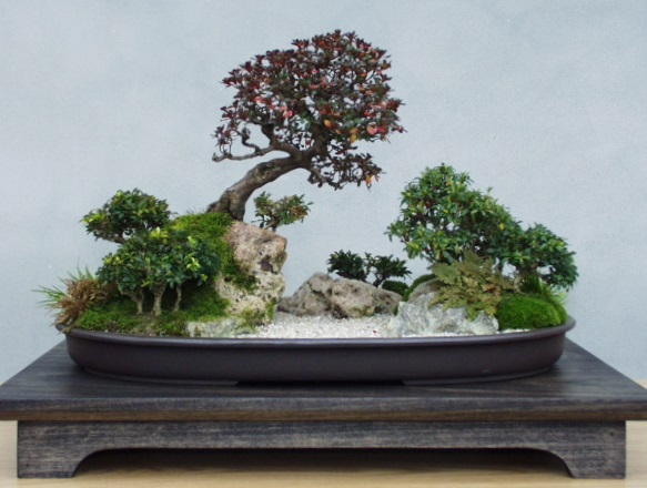 American Bonsai at the NC Arboretum - Page 2 _river11