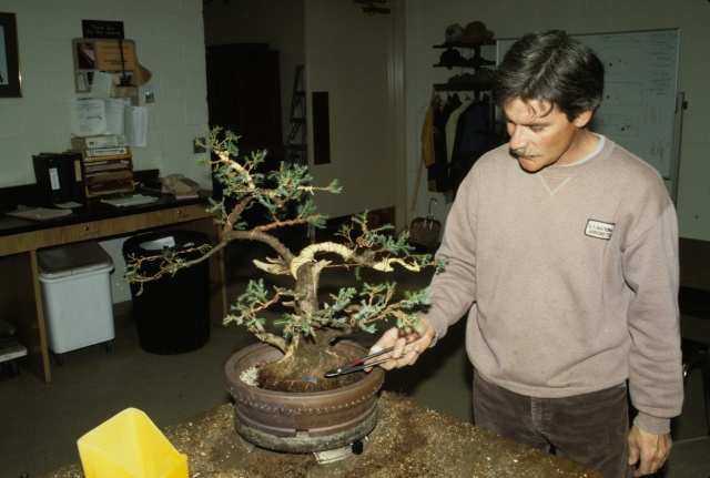 American Bonsai at the NC Arboretum - Page 2 Dan_ch10