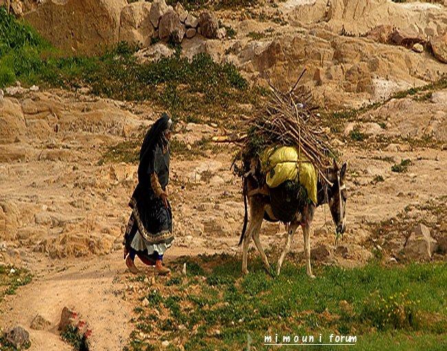 Pull  Femme - femme Amazigh berbere ma chérie  المرأة الامازيغية  Mimoun26