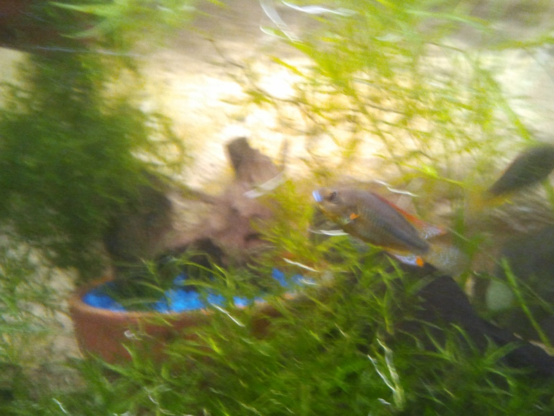 mon aquarium - Page 2 20130412