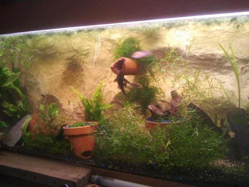 mon aquarium - Page 2 20130413