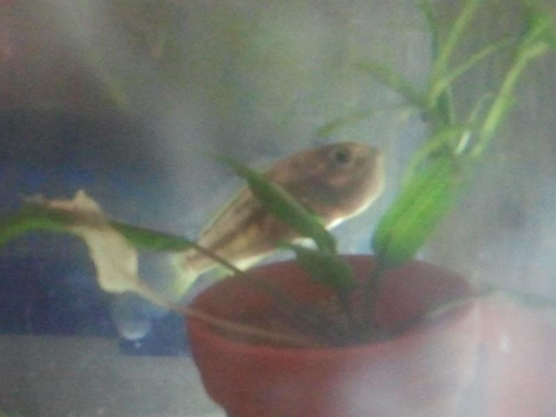 mon aquarium - Page 2 20130414