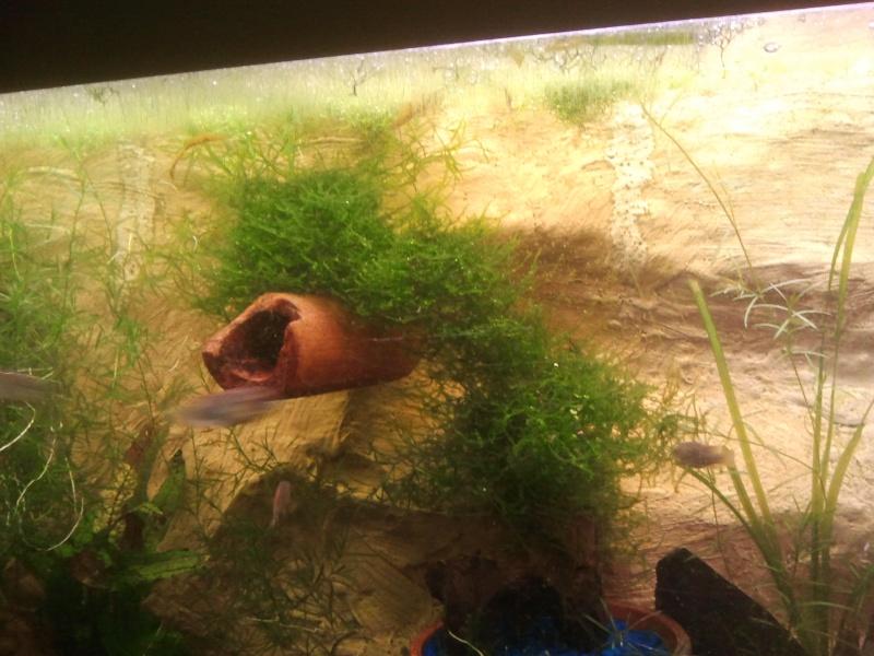 mon aquarium - Page 2 20130510