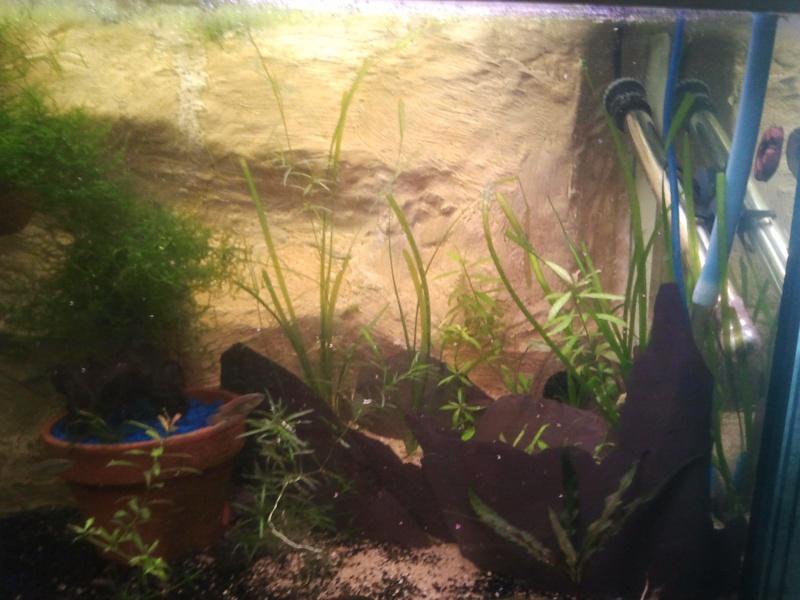mon aquarium - Page 2 20130512