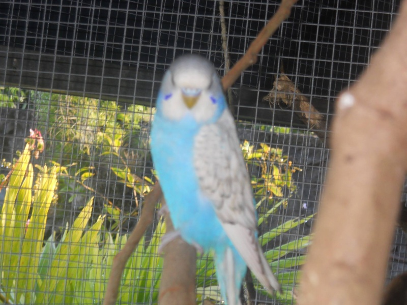 Male ou femelle 96576011
