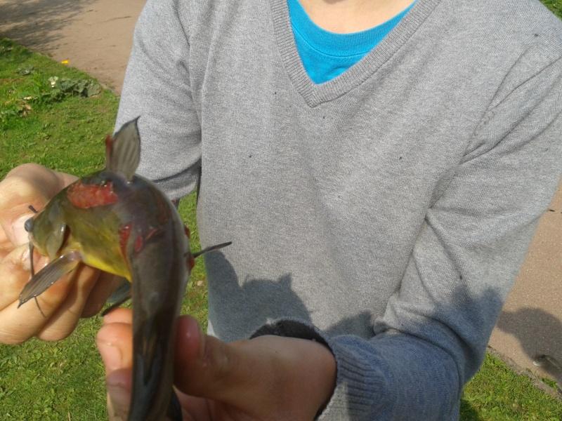 poisson chat mutilé Fhs210