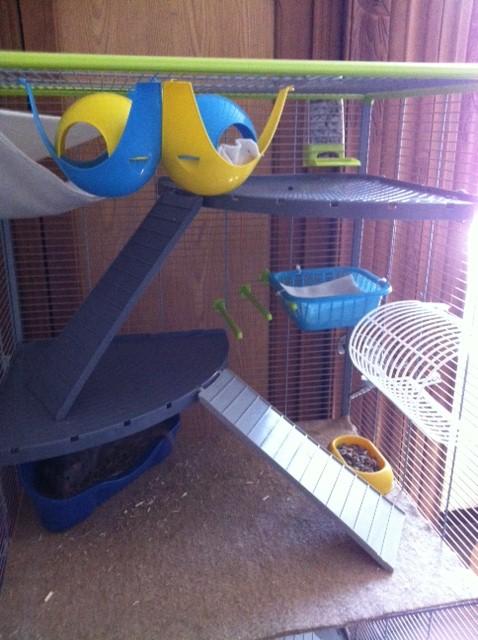 Le nid douillet de mes pioupiou Photo_13