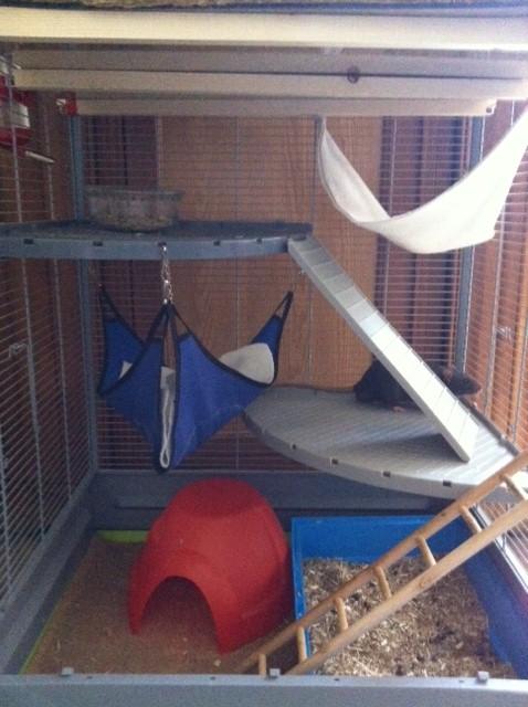 Le nid douillet de mes pioupiou Photo_14