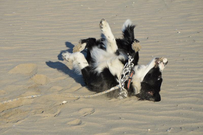 Photo de vos chiens à la plage! - Page 2 Dsc_0210