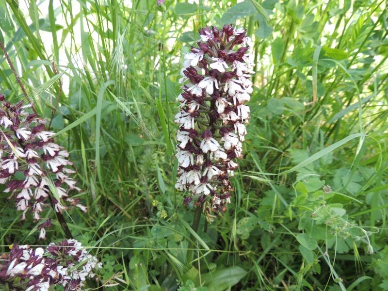 fleur à identifier Dscn0210