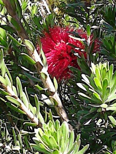 plante a identifier 13693010