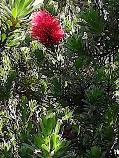 plante a identifier 13693011