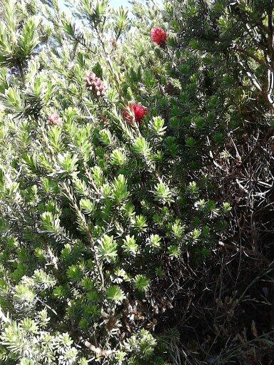 plante a identifier 13693012