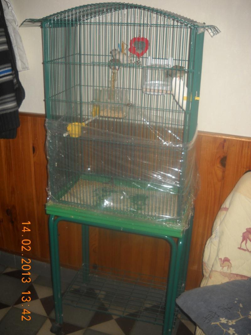 Qeuel cage pour mest perruche Dscn0110