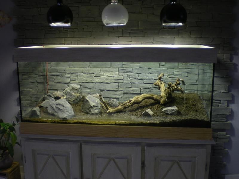 Mis en route de mon aquarium  Imgp0013