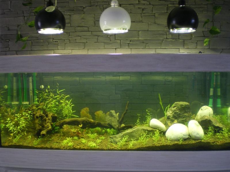 Mis en route de mon aquarium  Imgp0111
