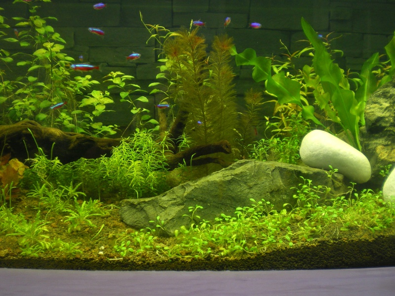 Mis en route de mon aquarium  Imgp0114