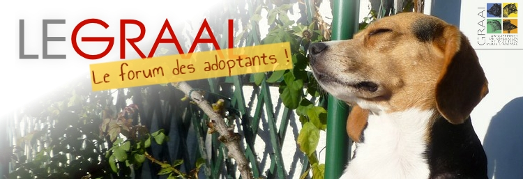 forum des adoptants GRAAL