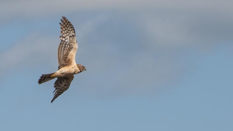 Oiseau en vol A_iden12