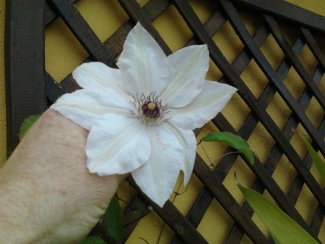Mes premières floraisons  Photo021