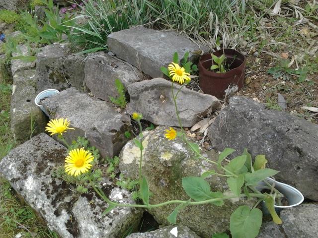 Mes premières floraisons  Photo024