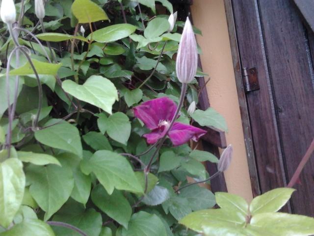 Mes premières floraisons  Photo025