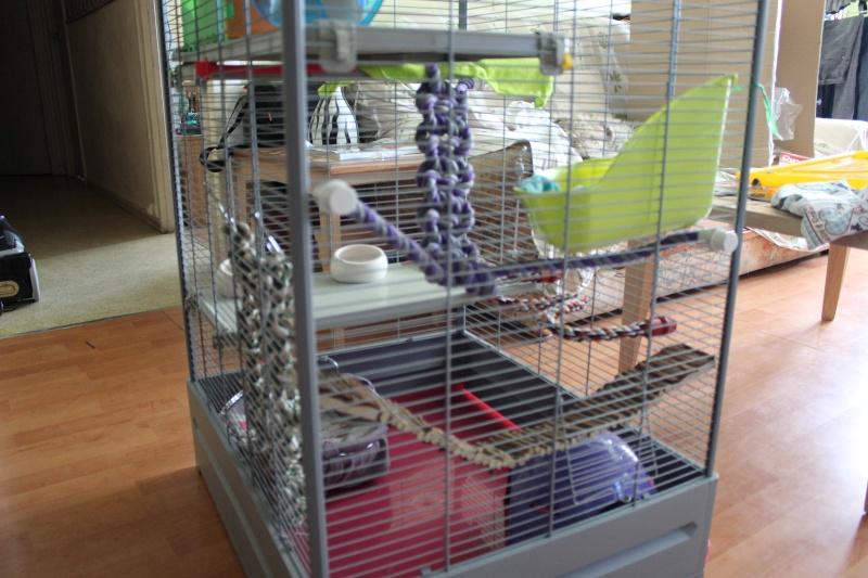 La cage de mes pepettes <3  - Page 2 Img_0713