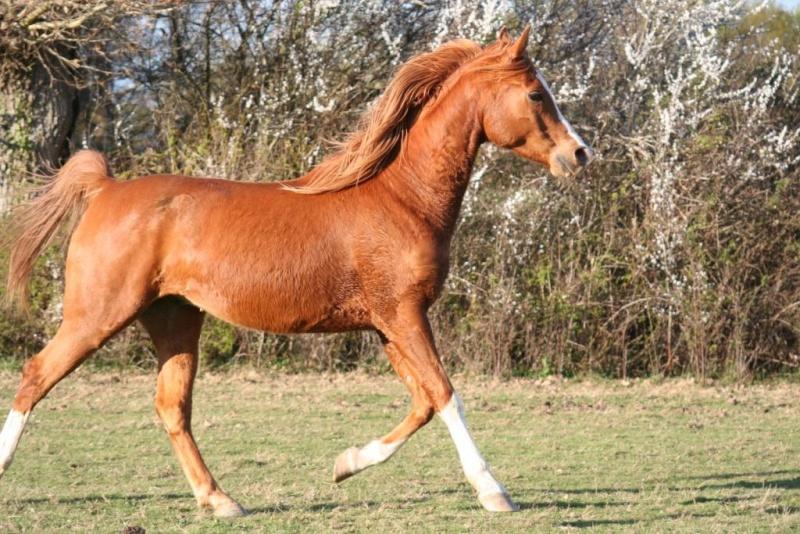 Heldon, PSAR ataxique, un cheval que l'on vouvoie Img_6910