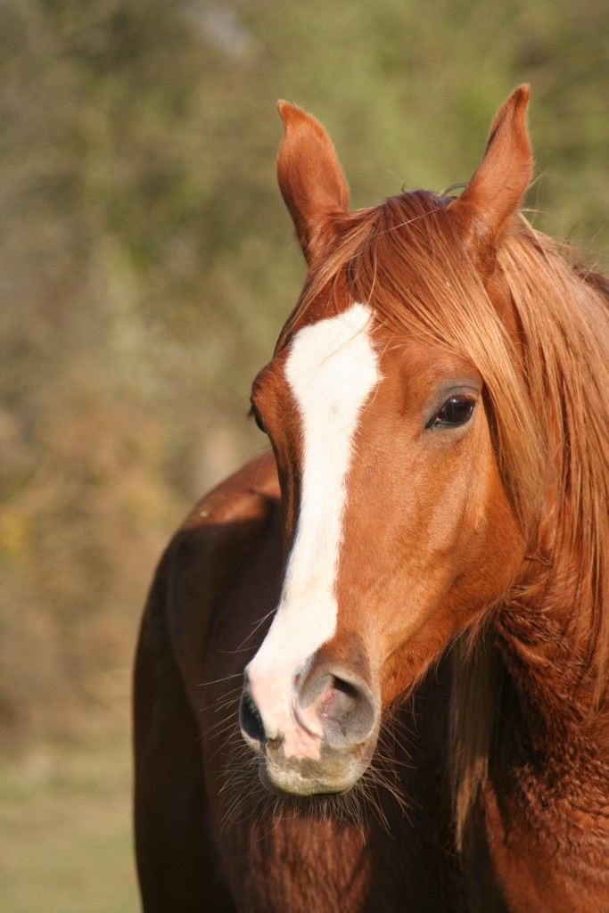 Heldon, PSAR ataxique, un cheval que l'on vouvoie Img_7012