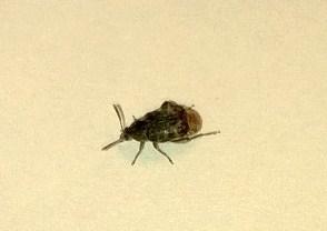 Besoin d'identifier un insecte dans notre maison Wp_20110