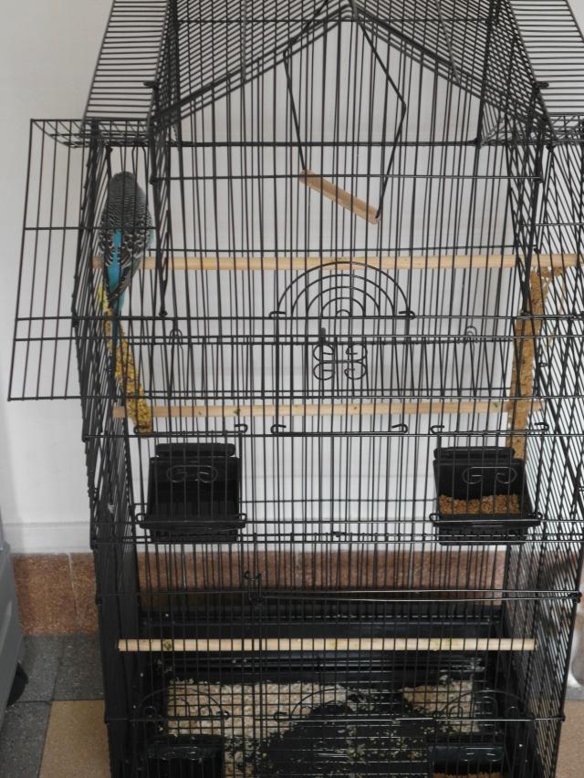 Nouvelle cage  Sam_0316