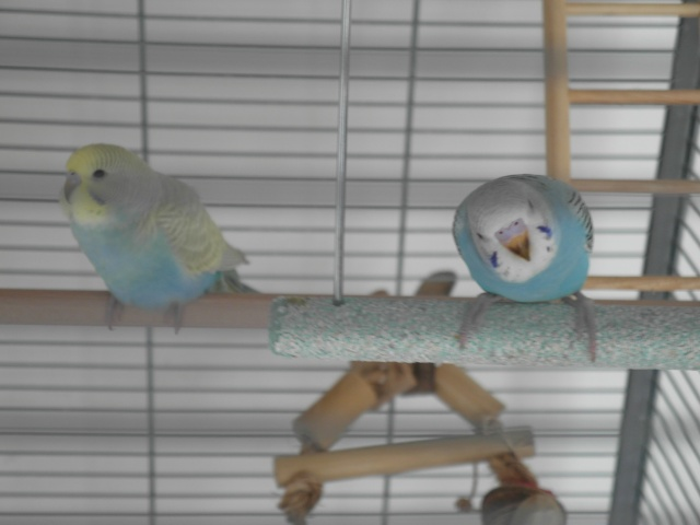 Nouvelle cage  Sam_0317