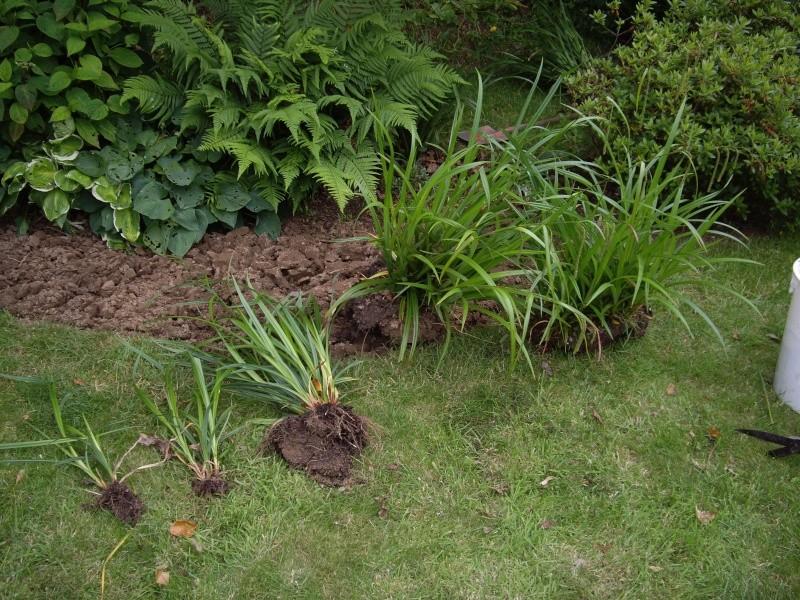 Carex Pendula Imgp4310