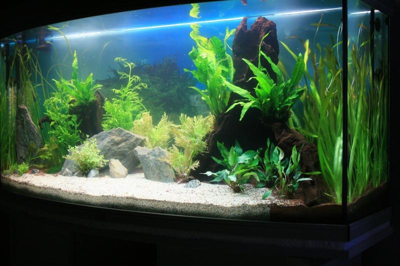 mon aquarium enfin... Img_3111