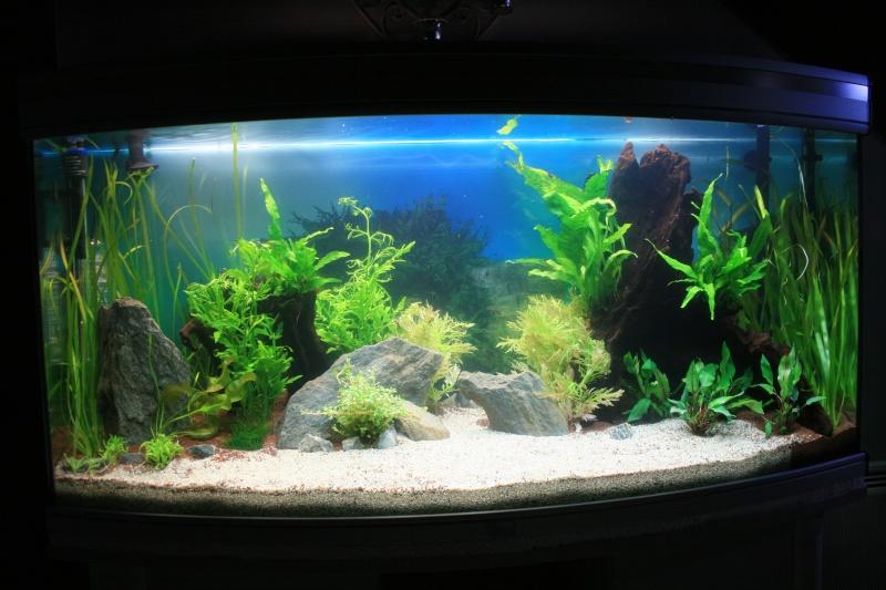 mon aquarium enfin... Img_3112