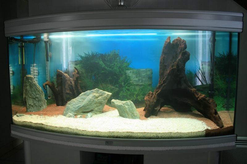 mon aquarium enfin... Img_3113