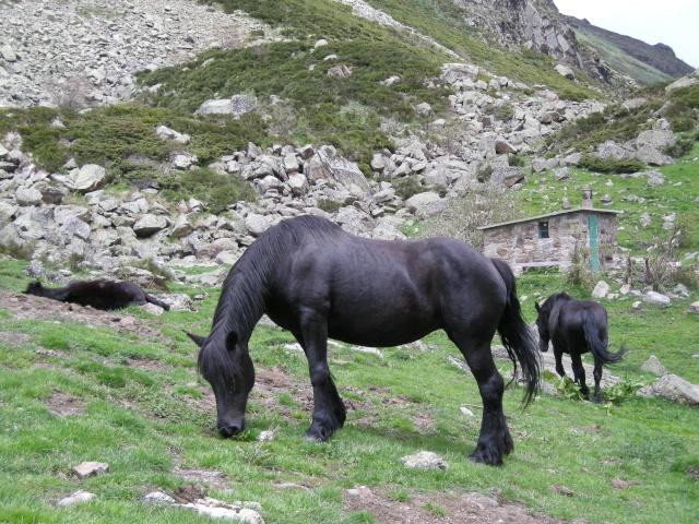 Une histoire, une anecdote, une vie peu commune d'un cheval, d'un cavalier, d'un meneur... Dscn5814