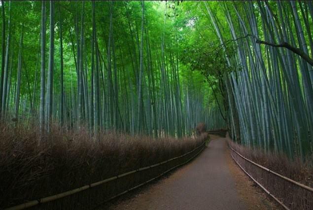 Tập Thơ Phùng Quân (2) - PHÙ-TANG MỘT CHUYẾN TRỞ VỀ  Bamboo10