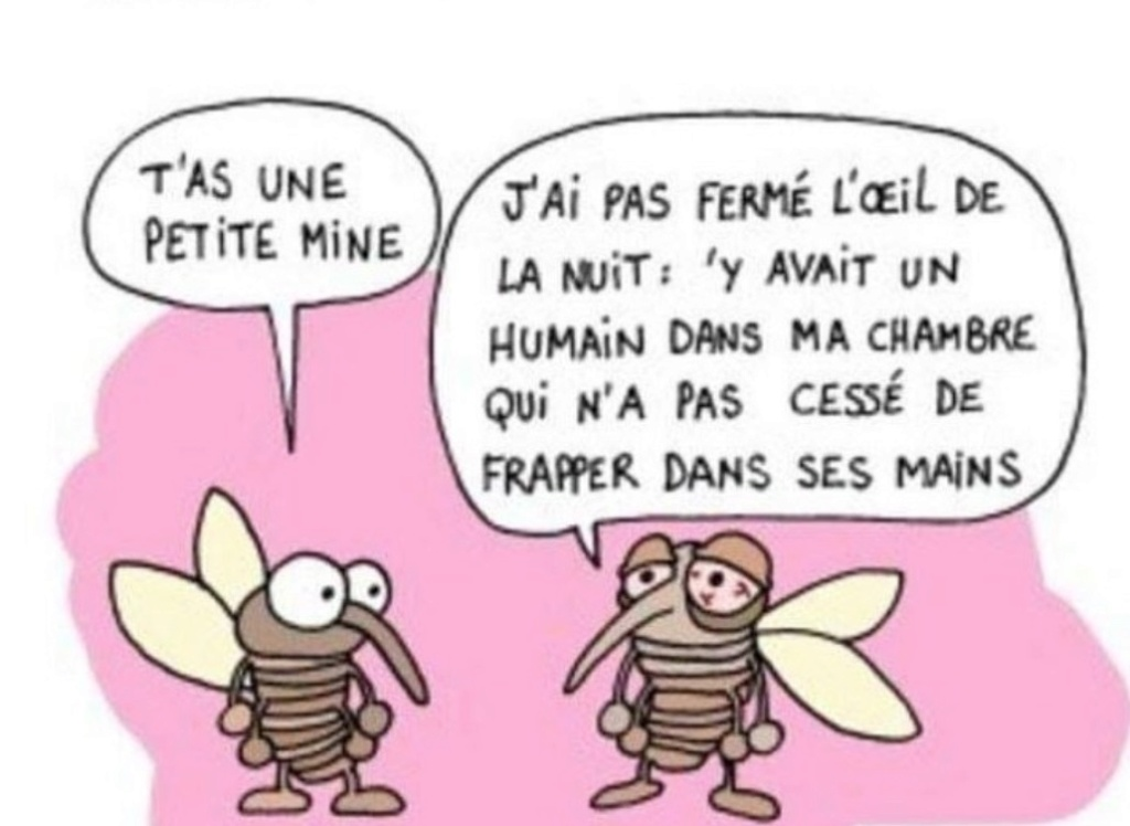 humour du jour - Page 28 Captu847