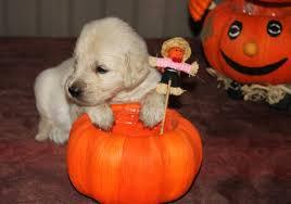 Joyeux Halloween ! Images10