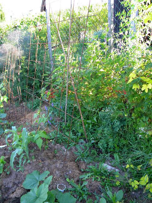 Fers à béton au jardin Fer-a-13