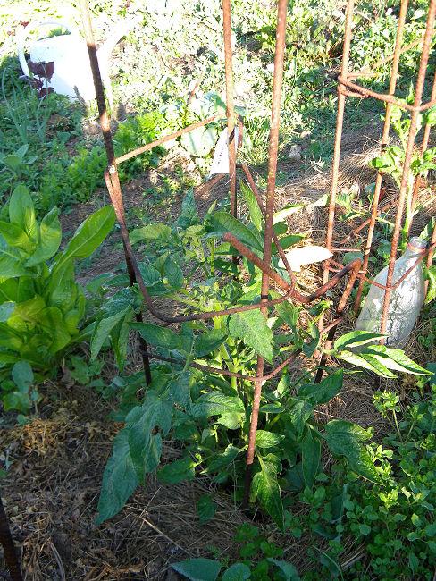 Fers à béton au jardin Fer-a-15