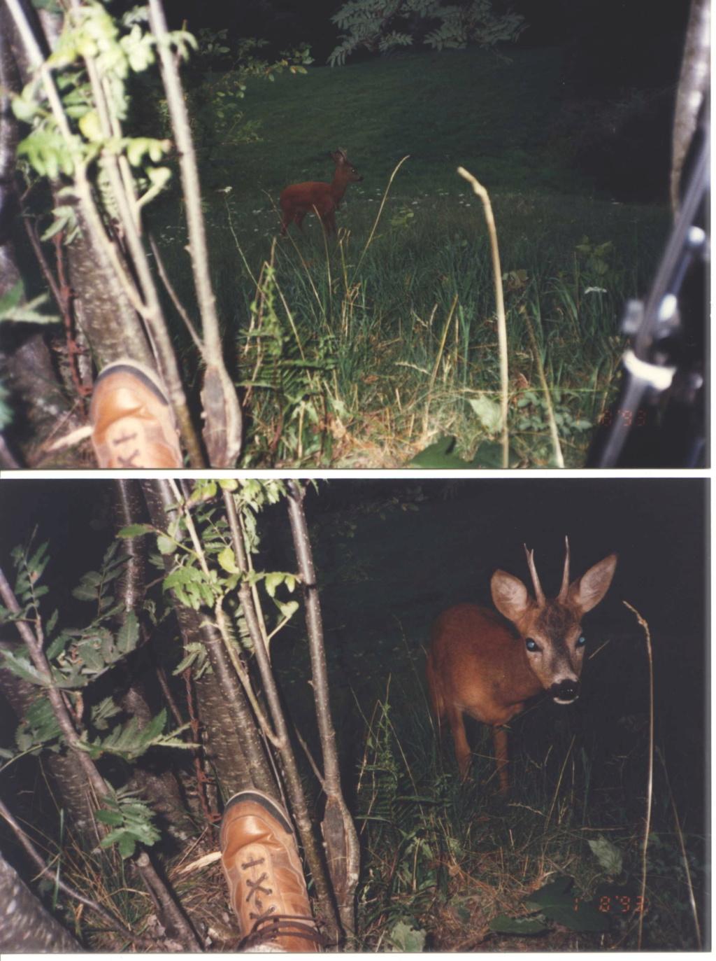 chasse d'été et odeur  1993_b12