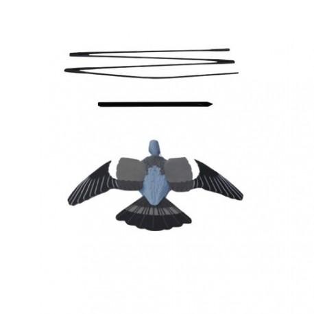 Nouvelles formes pigeons hd Forme-10