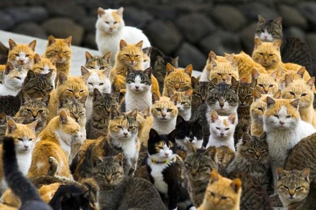 Cafofo dos Gato Follow10