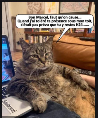 Images insolites - Page 7 Chat_c10