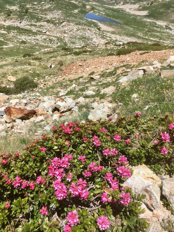 Col de la Lombarde frontière franco-italienne D8b06f10